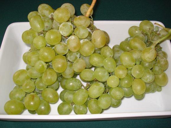 Obrázek ke článku hroznové víno réva vinná