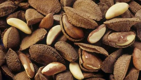 obrázek ke článku Juvie ztepilá - para ořechy